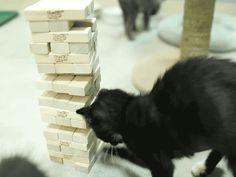【GIFアニメ】 ジェンガで遊ぶ子猫が凄いプレイを披露してるwww