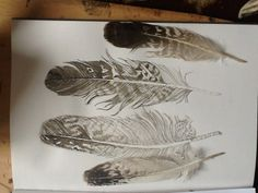 feather drawing black and white - Google Search