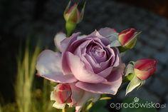 Ogród dla roślin o mocnych nerwach - strona 456 - Forum ogrodnicze - Ogrodowisko Novalis