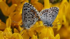 Spring lovers... by Thierry Dufour on 500px