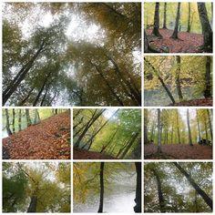 #Gökyüzünü görmek istedim...Kaldırdım başımı...Uzanan gövdelerin #Yapraklarının arasından #ışığı gördüm..#Yedigöllerde