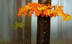Echo by Serban Bogdan on Art Limited Tree Mushrooms, Glass Vase, Landscape, Artwork, Nature, Flowers, Beautiful, Home Decor, Forests