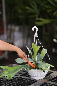 Organic Gardening For Dummies Refferal: 8670024996 Gardening For Dummies, Organic Gardening Tips, Lavender Plants For Sale, Patio Ideas Ireland, Staghorn Plant, Organic Horticulture, Plants Online, Gardening Gloves, Urban Gardening