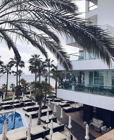 @leneorvik #regram #wemissyou #perfection #marbellahotel #AmareMarbella #iloveit #beach #palmtrees #marbella #marbellalife #amarepool #hotel #deluxe