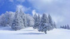 63 Ideas De Bosques De Invierno Invierno Paisajes Paisaje Nieve