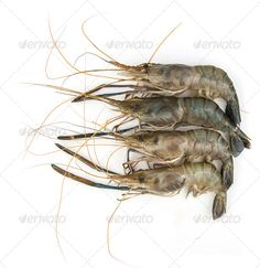 Realistic Graphic DOWNLOAD (.ai, .psd) :: http://vector-graphic.de/pinterest-itmid-1006762454i.html ... Shrimp on white background ...  agriculture, arrange, background, crustacean, different, food, freshness, ingredient, iodine, isolated, prawn, prepared, raw, seafood, shrimp, white  ... Realistic Photo Graphic Print Obejct Business Web Elements Illustration Design Templates ... DOWNLOAD :: http://vector-graphic.de/pinterest-itmid-1006762454i.html