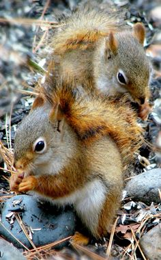 . squirrels