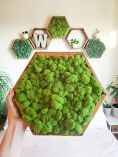 Custom made Hexagon shelving! We are offering trendy bohostyle hexagon / honeycomb shelves for your Moss Wall Art, Moss Art, Honeycomb Shelves, Hexagon Shelves, Moss Graffiti, Moss Decor, Scandinavian Style Home, How To Clean Furniture, Honey And Co