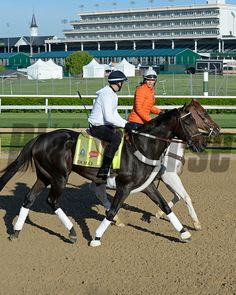 Caption: Bolo<br /> Horses on the track at Churchill Downs on Sun. April 27, 2015, in Louisville, Ky., in preparation for the Kentucky Derby and Kentucky Oaks.<br /> Works4_27_15 image760<br /> Photo by Anne M. Eberhardt