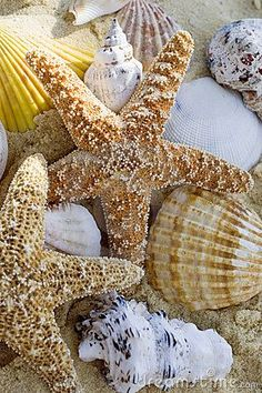 Photo about Starfish and shells on the beach, close up. Image of tropical, holiday, beach - 981957 I Love The Beach, Ocean Beach, Summer Beach, Sea Creatures, Belle Photo, Under The Sea, Starfish, Sea Shells, Coastal