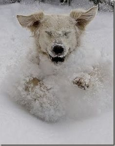 I love the snow this much! (via Vintage Bag Lady)