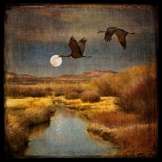 Items similar to Buy any and get one free (Moonrise over the Bosque shown) on Etsy Nocturne, Art After Dark, Art Walk, Dark Skies, Illustrations, Moon Art, Blue Bird, Pet Birds, Moonlight