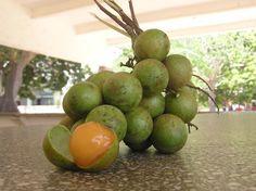 Mamoncillo aka honeyberry