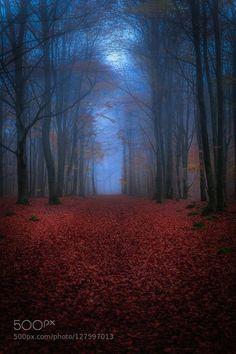 """Enchanted"" by Göran Ebenhart"