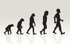 A mysterious illness (probably tuberculosis) is thought to have wiped out all but 2,000 of our early ancestors around 70,000 BC — putting us shoulder-to-shoulder with black rhinos and giant pandas on the endangered species list Know more #Interesting #Facts About Human Evolution at here http://www.quizgeny.com/facts-guide/15-health-and-fitness/90-facts-about-human-evolution #amazing #mindblown