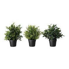 FEJKA Artificial potted plant, herbs, assorted species plants - IKEA