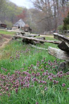 wild #flowers at Mount Vernon  #photography