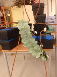 Borden av Eucalyptus til kjolen på modellen av armeringsjern