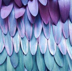 Plumes et re plumes - The Shoppeuse