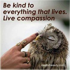 Se amable con todo lo que tiene vida. Vive la compasión.