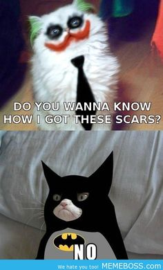 Check out: Animal Memes - Grumpy Cat Batman. One of our funny daily memes selection. We add new funny memes everyday! Grumpy Cat Quotes, Funny Grumpy Cat Memes, Funny Animal Memes, Cute Funny Animals, Funny Cute, Cute Cats, Funny Memes, Grumpy Kitty, Grumpy Baby