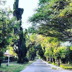 Street view of Sector G-6 #inislamabad #islamabad #G-6 #g64 #greenery