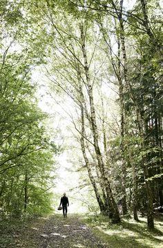 26 Picnic i skoven