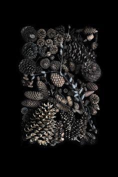 pinecones | STILL  (mary jo hoffman)