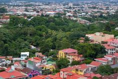 'Sweet City': the Costa Rica suburb that gave citizenship to bees, plants and trees   Environment   The Guardian
