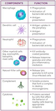 Innate and Adaptive Immunity
