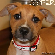 Cooper was adopted on 9/6/14!