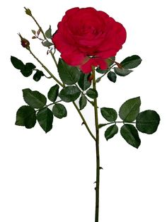 Linda rosa vermelha, com 1 botão aberto grande, qualidade extra | Referência: 1356700000604 | Altura: 68 cm | Composição: Tecido,  Plástico e Arame