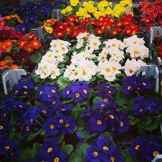Sezonun En Güzel Renkleri Plants, Jewelry, Jewlery, Jewerly, Schmuck, Jewels, Plant, Jewelery, Fine Jewelry