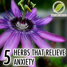 Here are five herbs that can relieve anxiety and help you go through life positively once again.