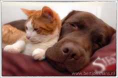 Most adorable! SO many great pix.  Hessel & Hannes