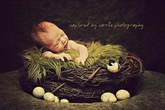 Future Studio prop. (SET Olive Fur and Wood Branch Nest Owl Bird Photography Prop Newborn Baby Infant. $69.00 USD)