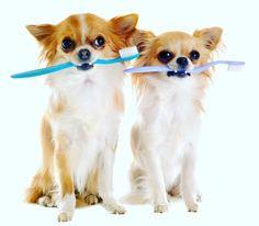 Veterinary Medicine, Teeth Cleaning, Pet Health, Dental Care, Top Ten, Pet Care, Your Pet, Corgi, Signs