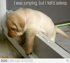 too tired to finish the jump