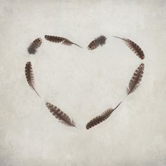 Hope is the Thing With the Feathers  Feather Heart  by kanelstrand, $29.00