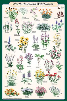 North American Wildflowers