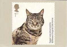 PHQ Battersea Dogs & Cats Home Tigger Postcard
