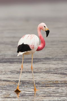 Flamingo - love the colors on this one