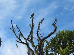 Fisionomia: Mata Atlântica, Cerrado e Campos Rupestres. Local: Parque Estadual do Ibitipoca.