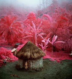 Pink Soldiers by Richard Mosse  Richard Mosse used an infrared Aerochrome dia-film to portray ongoing war in DR Congo.