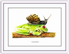 "Aquarell ""Frosch mit frecher Schnecke"" 32x24cm, IIX-XV-XV, Artist Dirk NeeRidsch #Dirk NeeRidsch, #Aquarell, #Frosch, #Painting, #Watercolor"