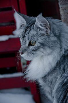 #cats #eyes