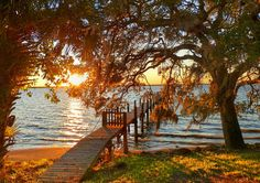 Southern Live Oaks next to a dock at sunset... Perfection -Melbourne Beach, FL