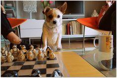 Bimba visiting us.  Pets are welcome in Hotel Villamor Denia.