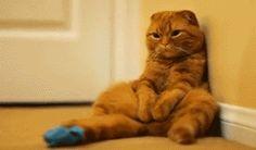 lazy. kitten. cat. funny