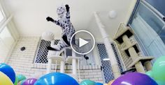 Boomer is quite the energetic little kitty and has a complete ball (see what I did there?)when he discovers thisball pit filled with colorful objects!  This cat'sownershad no clue how much fun he wouldreally have, but when they showed this adventuroustabby the ball pit, you've gott